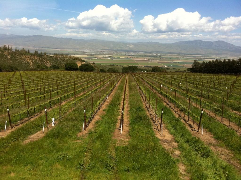 Hahn Vineyard